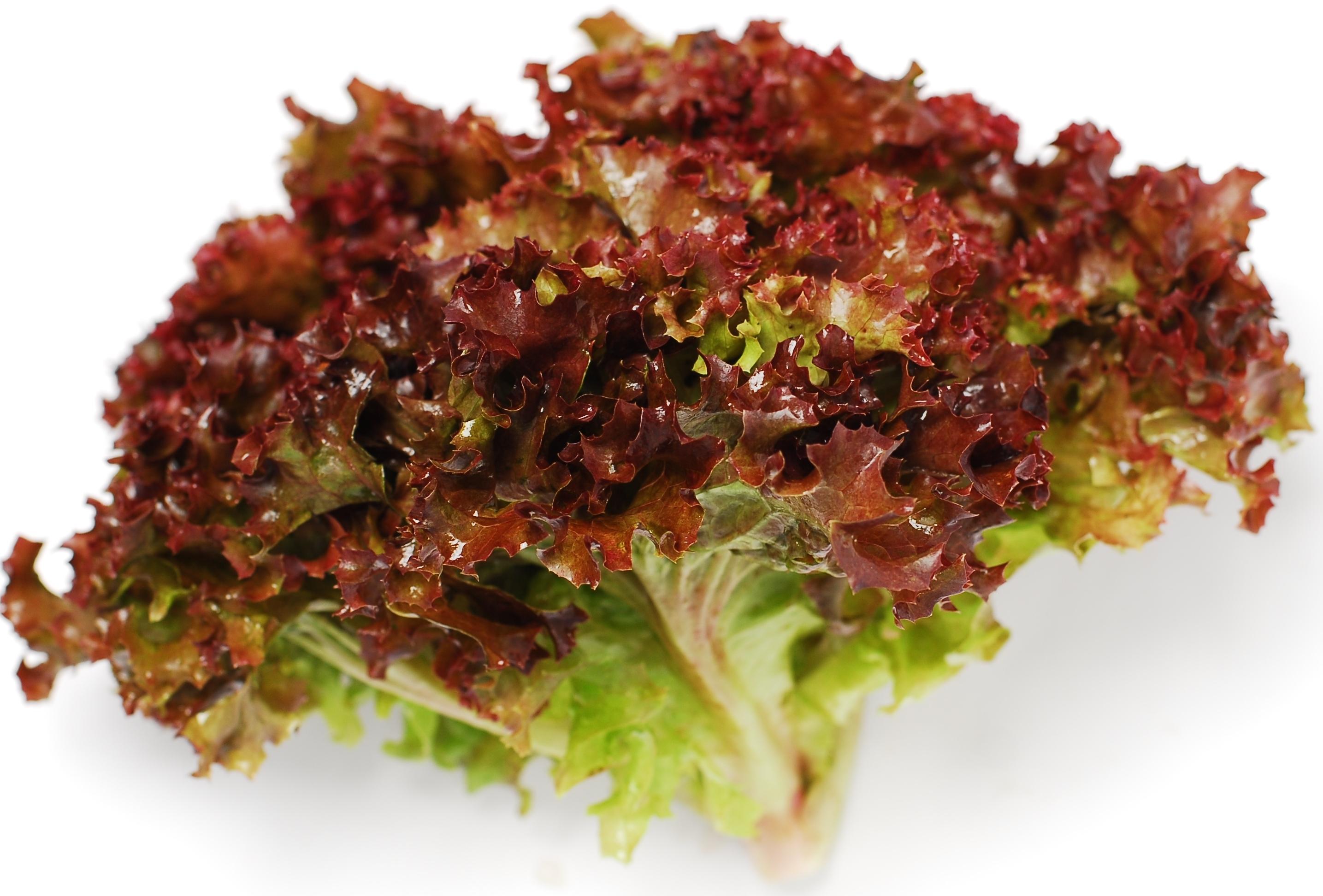 Салат Лоло россо, нежные курчавые листья с красной каймой